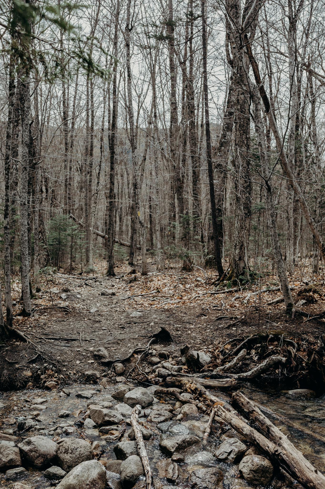 LarueElopementerinwheatco-3664 Mount Willard Elopement | Calib & Scotlyn