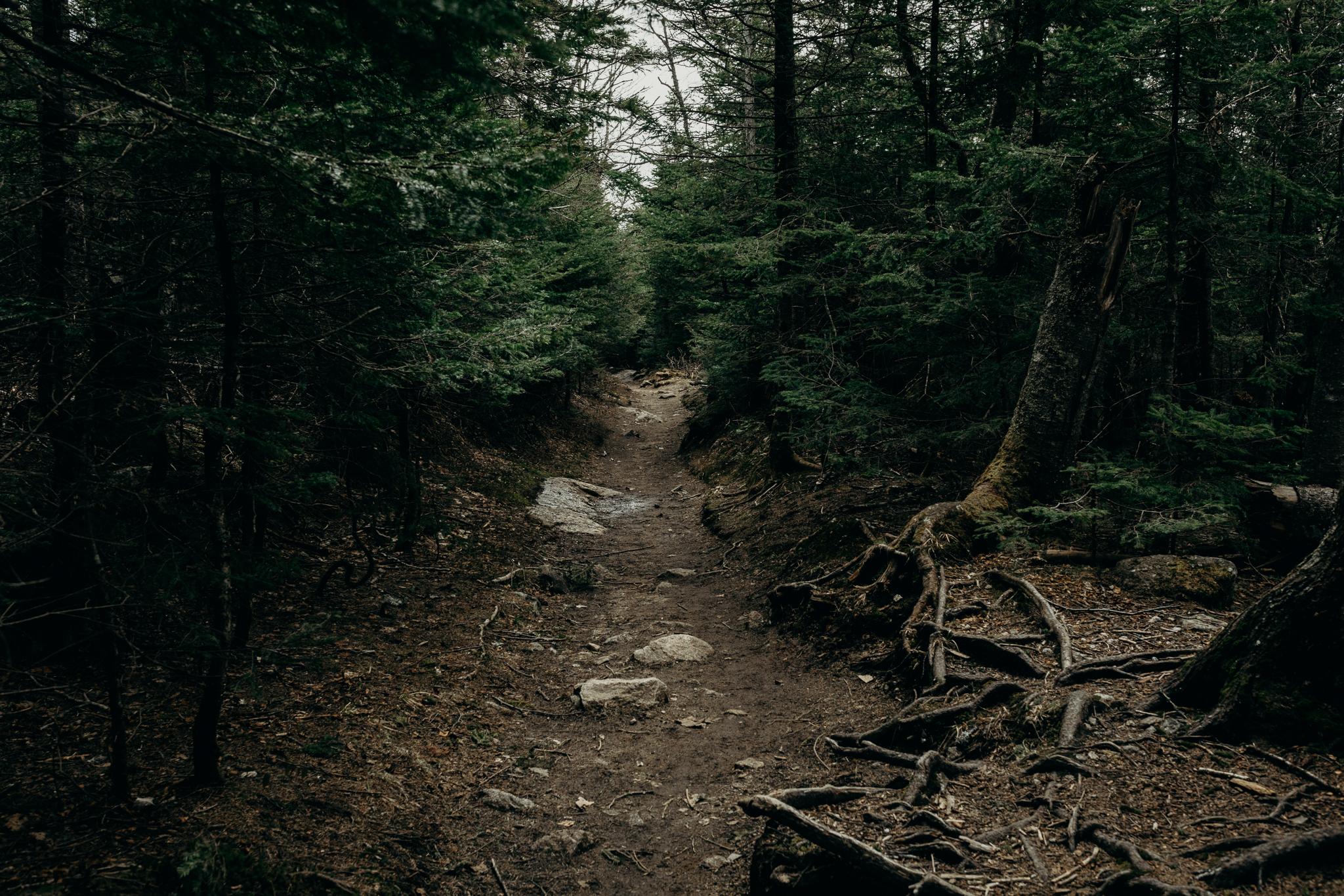 LarueElopementerinwheatco-3954 Mount Willard Elopement | Calib & Scotlyn