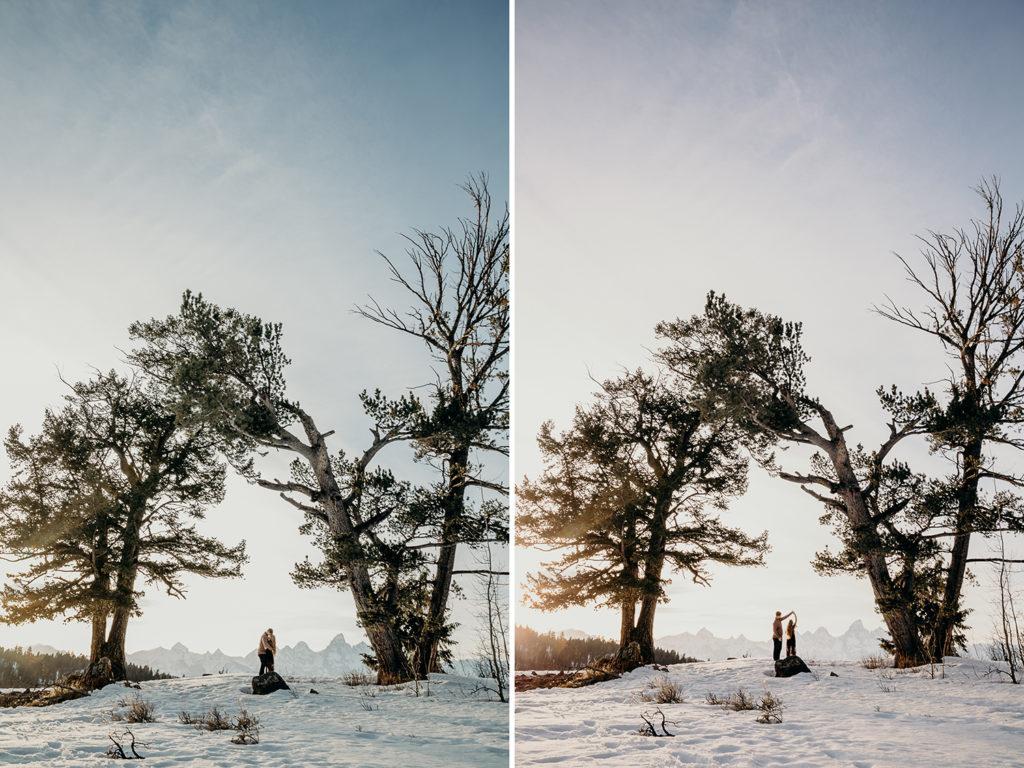 the wedding tree grand teton national park engagement